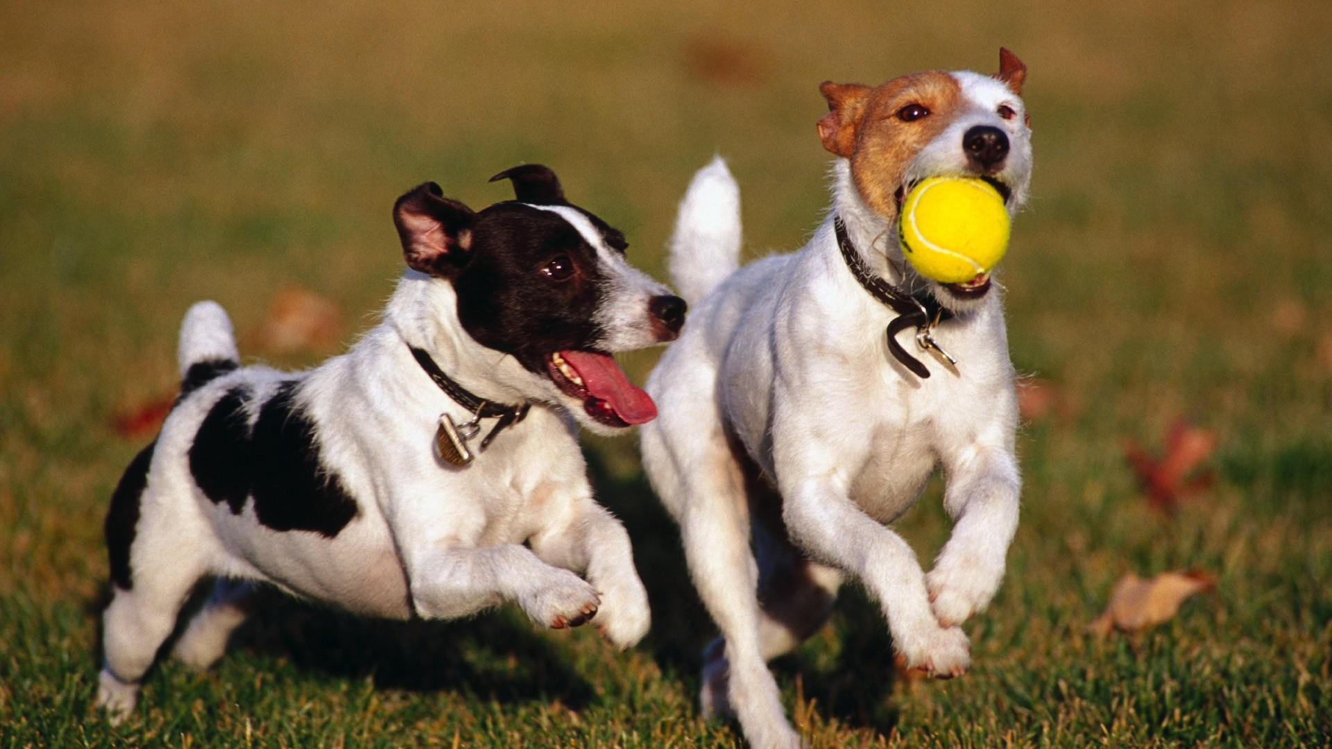 com ensenyar als gossos amb joc