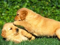 La socialtizació d'un gos és indispensable per a que tingui un vida sana i tranquila