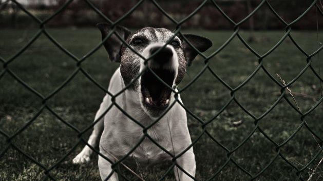 Gossos amb mal comportament que requereixen d'ajuda professional.