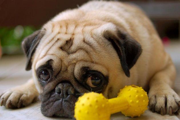 T' ajudem a solucionar problemas de comportament o a millorar l'actitud del teu gos.